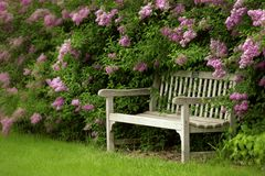 The bench. Image a a park bench with lilacs surrounding it royalty free stock image
