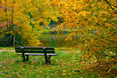 Bench along lake in autumn Royalty Free Stock Image