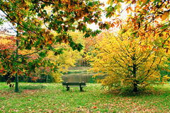 Bench along lake in autumn Royalty Free Stock Photography