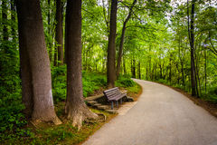 Bench along a path through the forest at Centennial Park in Colu. Mbia, Maryland Royalty Free Stock Images