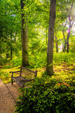 Bench along a path through a forest at John Hopkins University i Stock Photography