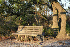 Bench Along a Trail in Early Morning Light Stock Photos