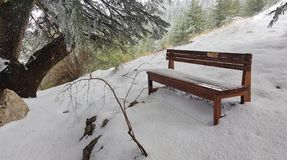 A bench along a trail royalty free stock photo