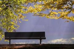 Bench And Tree Stock Photos