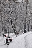Bench And Tree With Snow Royalty Free Stock Photography