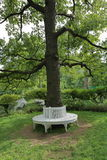 Bench around tree. The idea of the location of the plastic benches around a tree in the garden or in the park Royalty Free Stock Photography