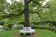 Bench around tree. The idea of the location of the plastic benches around a tree in the garden or in the park Stock Image