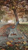 Bench in the automn park. Falling leaves on the bench in the automn park Stock Photography