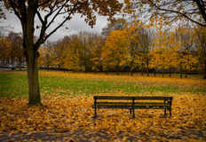 bench autum leaves Royalty Free Stock Photo