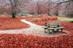 Bench on autum Stock Photography