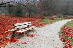 Bench on autum in park Royalty Free Stock Image