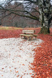 Bench on autum in park under tree Stock Images