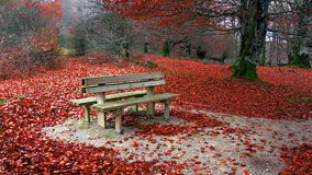 Bench in autumn Stock Images