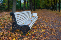 Bench at the autumn alley. Photographed in the town of Pushkin, Leningrad district, Russia Royalty Free Stock Image