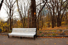 Bench in the autumn city park Stock Image