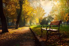 Bench in the autumn city park. Beautiful empty morning scenery royalty free stock images
