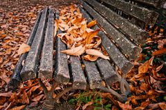 Bench with autumn fall leaves. Bench with autumn or fall leaves stock photos