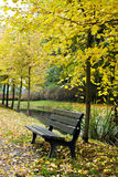 Bench in autumn forest Stock Images