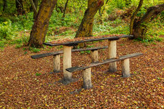 Bench in the autumn forest Stock Images