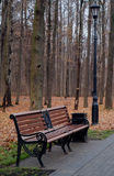 Bench in the autumn forest Stock Photo