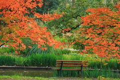 Bench in the Autumn Forest park royalty free stock photography