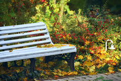 Bench in the autumn forest, park. Wooden bench painted with white paint in autumn garden, park. Many beautiful multi-colored bright autumn plants, shrubs with stock photos