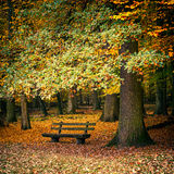 Bench in autumn forest Royalty Free Stock Photos