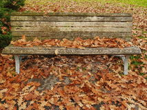 Bench autumn leaves covered Stock Images