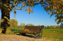 Bench in autumn park Royalty Free Stock Image