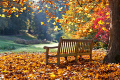 Bench in autumn park. Stock Images