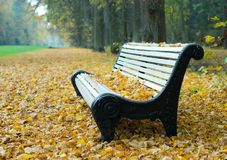 Bench in a autumn park Stock Images