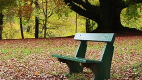 Bench in autumn park stock video footage