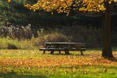 Bench in autumn park Royalty Free Stock Photos