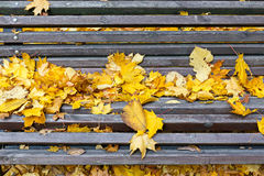 Bench in autumn park with fallen Royalty Free Stock Images