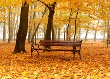 Bench in autumn park in foggy day. Bench in golden autumn park in foggy day Stock Photo