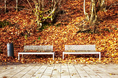 Bench in autumn park. Forest hill with fall foliage, couple of modern benches, garbage bin and pathway. November landscape Stock Photography
