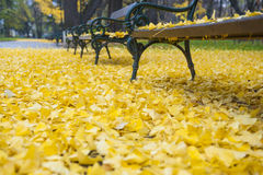 Bench in autumn park. Autumn landscape Royalty Free Stock Photography
