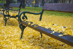 Bench in autumn park. Autumn landscape Royalty Free Stock Images