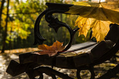 Bench in the autumn park with maple leaves Royalty Free Stock Images
