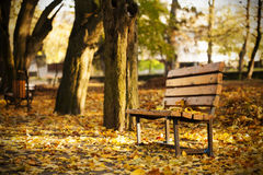 Bench in the autumn park Royalty Free Stock Image
