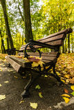 Bench in the autumn park with red and yellow maple leaves Royalty Free Stock Photos
