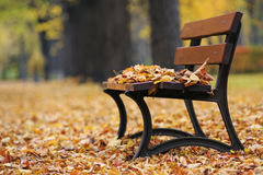 Bench in autumn park. Wooden bench in the autumn park Stock Photography