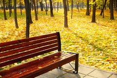 Bench in autumn park. Wooden bench on a background of yellow fallen leaves.autumn landscape Stock Photography