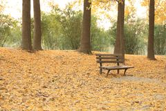 Bench in autumn park stock image
