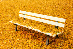 Bench in autumn park Stock Photo