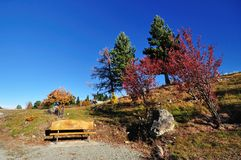 Bench and autumn tree royalty free stock photography