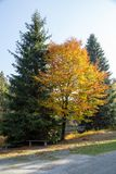A bench at autumn trees at a path. The sun is shining royalty free stock photos