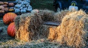 Bench among bales of hay and pumpkins Royalty Free Stock Photos