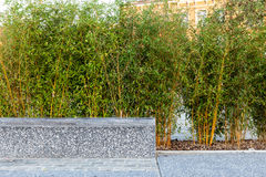 Bench and bamboo Stock Image