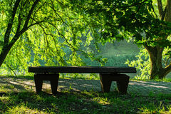Bench on the bank of the lake in summer day Stock Photography
